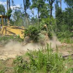 Clearing Pastures.