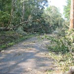 Isabel trees fell over Mount Pleasant drive.