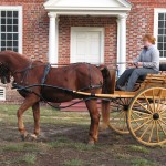 Trying out the new carriage horse.
