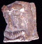 Fragment of a Bartmann mask found in the East field at Paces Paines.